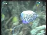 إضغط لمشاهدة ''كنوز المحيط الهندي (أسرار البحار) ''