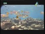 إضغط لمشاهدة ''جزر سيشل (جواهر الأعماق) ''