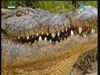 إضغط لمشاهدة ''مفترسات الهيمالايا(الحياة البرية في اسيا) ''