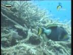 إضغط لمشاهدة '' الأعماق لساحرة(أسرار البحار) ''