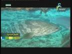 إضغط لمشاهدة ''جزيرة تحت الماء(جواهر الأعماق) ''