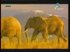 إضغط لمشاهدة ''تحرك الحيوانات علي الأرض(هكذا تتحرك الحيوانات) ''