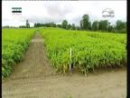إضغط لمشاهدة ''أبحاث المحاصيل(المحققون) ''