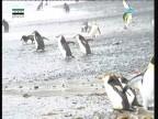 إضغط لمشاهدة ''السباق مع الشتاء (روائع أمريكا الشمالية) ''