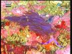 إضغط لمشاهدة ''حمية سريع الغذائية  (لعبة الألوان) ''