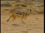 إضغط لمشاهدة ''صحراء الصدع الكبير(الصحراء) ''