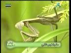 إضغط لمشاهدة ''الحشرات الأليفة (عالم الحشرات) ''
