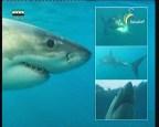 إضغط لمشاهدة ''الحلقة 1 (قريبا من القرش) ''