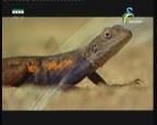 إضغط لمشاهدة ''صحراء اناسازي (الصحراء) ''