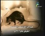 إضغط لمشاهدة ''ثعلب كيت طويل الآذان (منقرضات معاصرة) ''