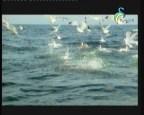 إضغط لمشاهدة ''شمال شرق ايطاليا (أطلس العالم) ''