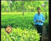 إضغط لمشاهدة ''المروج الخضراء (عالم الحدائق الخفي) ''