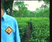 إضغط لمشاهدة ''المروج الخضراء 2 (عالم الحدائق الخفي) ''