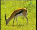 إضغط لمشاهدة ''غابة الغزلان 2  (عالم الحيوان الغامض) ''