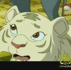 النمر الأبيض