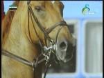حكايات الخيول
