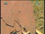 مسيرات الفيلة
