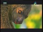الحياة البرية في آسيا