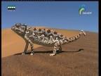 تنين نامبيا