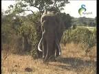 موطن الفيلة