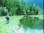الغابة الصينية