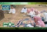 [77] باب التعجب (24/12/1432هـ) شرح ألفية ابن مالك