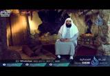 مولد عثمان رضي الله عنه ونسبه - ح1 - الخليفتان