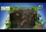 الارزاق ( 2/6/2017 ) احلى فطار