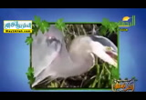 طيور تأكل كل شئ ( 11/6/2017 ) احلى فطار