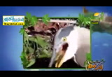 طيورتأكلكلشئ2(12/6/2017)احلىفطار