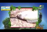 الثعبان يصطاد السمك ( 22/6/2017)أحلى فطار