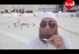 ( 10) لو توكلتم على الله حق توكله لرزقكم كما يرزق الطير  - خواطر مصرية