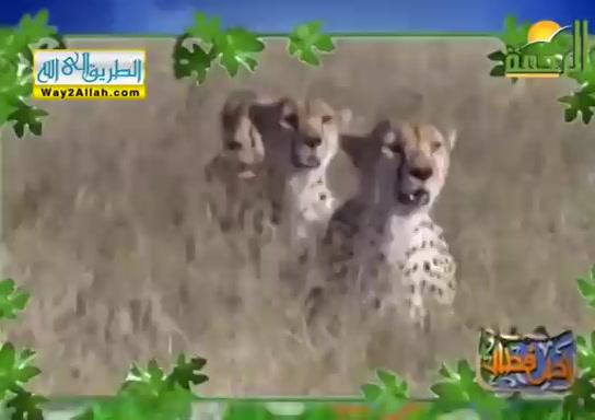 الرزاق ( 9/5/2019 ) احلى فطار