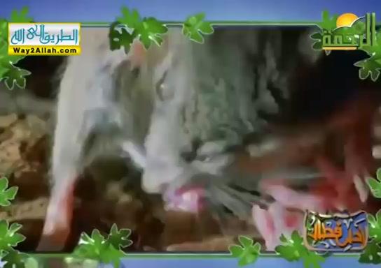 الرحمن الرحيم ( 10/5/2019 ) احلى فطار