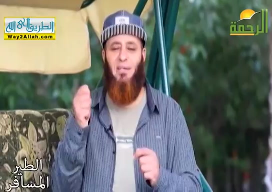 علىبلدالمحبوب_طيبةالطيبه_(15/5/2019)الطيرالمسافر