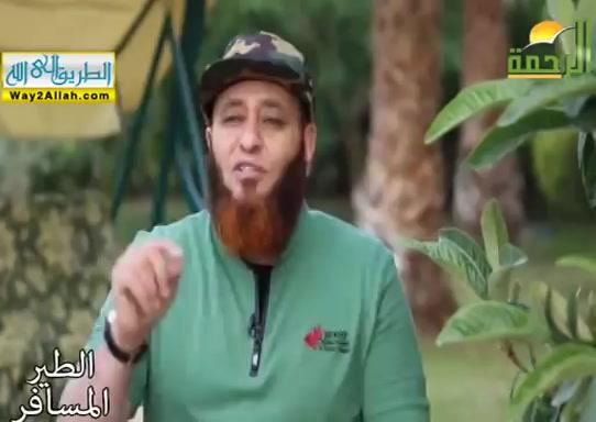 رجليصلىبالملائكه_الفلاه_(17/5/2019)الطيرالمسافر