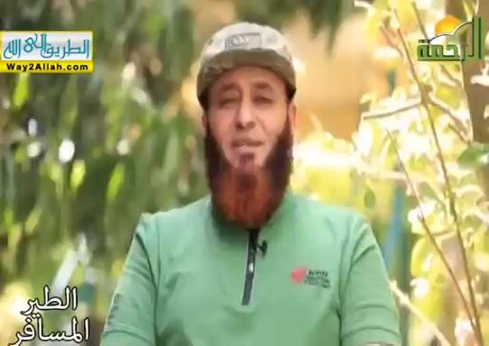 جابر عثرات الكرام _إقليم أقور_ ( 18/5/2019 ) الطير المسافر