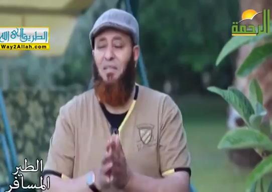 ملك الدنيا...امن المولى ( 19/5/2019 ) الطير المسافر