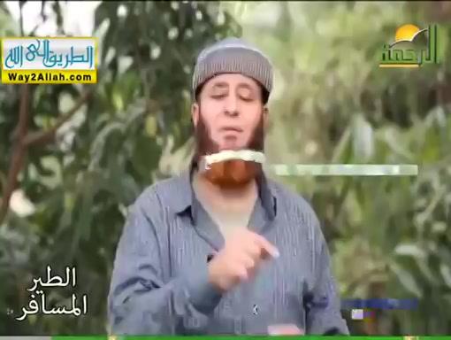 الشام وكلام خير الانام ( 29/5/2019 ) الطير المسافر