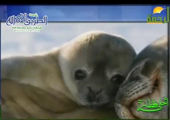 كلاب البحر فى القطب الشمالى ( 4/5/2020 ) احلى فطار