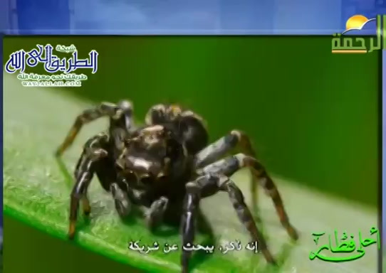 العنكبوت القاتل ( 14/5/2020 ) احلى فطار