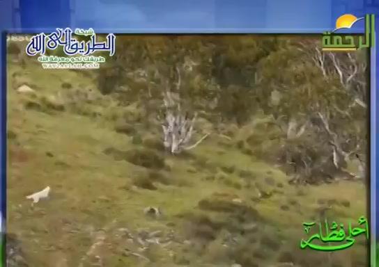 كلابالدينغو(18/5/2020)احلىفطار