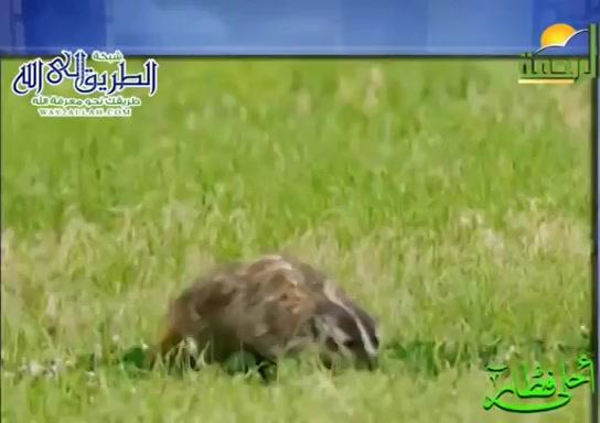 القندسالبرى(21/5/2020)احلىفطار