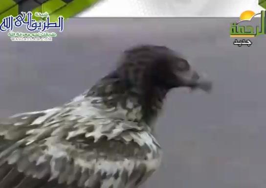 عجائبطلبالرزق-الطيور-(16/8/2021)هذاخلقالله