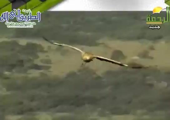 عجائبطلبالرزق-الطيور-اصطيادالمخلوقات(9/8/2021)هذاخلقالله