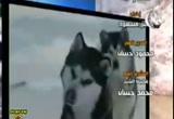 أخطر حيوان (29/8/2011) عبر وعبرات