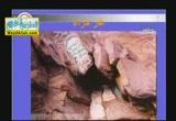 الكهاف والمغارات والنوازل والهوابط ( 29/5/2012 ) بين العلم والإيمان