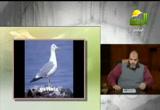 النطق والكلام وأصوات الحيوان( 12/2/2013) الحيوان في القرآن
