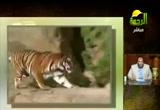 طعام الحيوان ج2( 16/4/2013)الحيوان في القرآن