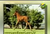 طعام الحيوان6( 14/5/2013) الحيوان في القرآن